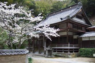 春:桜と本堂
