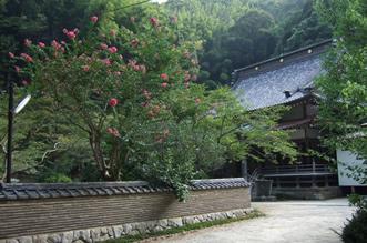 夏:百日紅と本堂