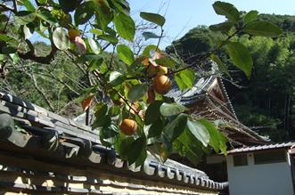 秋:柿と本堂