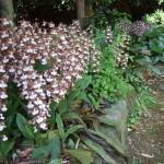境内の清掃をしてくださったご夫婦が植えたエビネ、白く清楚な花です。