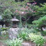 夏、濃緑色の境内に百日紅の赤とてっぽうユリの白い花が際だちます。