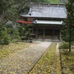 「まだ、絨毯と呼ぶには、葉っぱが少ない」と、撮影者はコメントしてました。