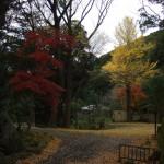 銀杏の葉が落ち、やがて紅葉した楓も落葉し、境内は冬景色となります。