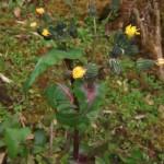 境内に咲いた野草