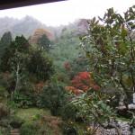 11月24雪(霙)が降りました。