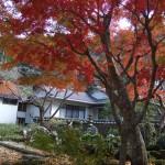 12月3日(土)境内の池の縁の紅葉です。