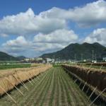 2011_0910秋風景0012